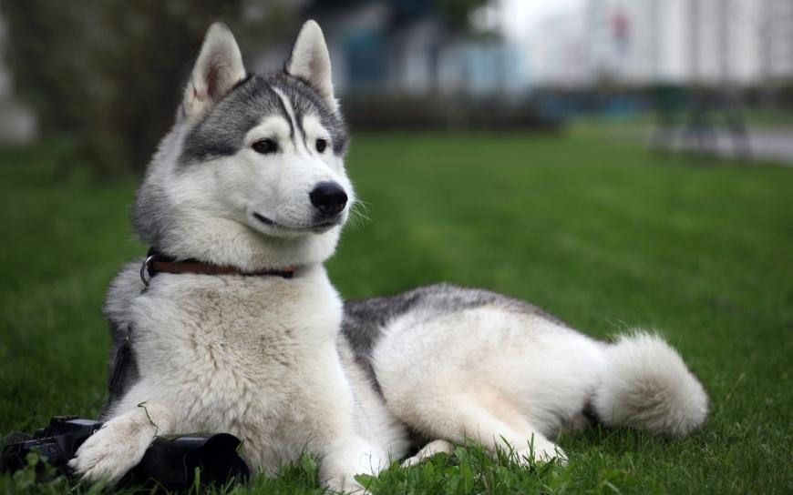 Определяем питомцев по знаку Зодиака – читаем, какие собаки больше всего подходят и похожи на вас!