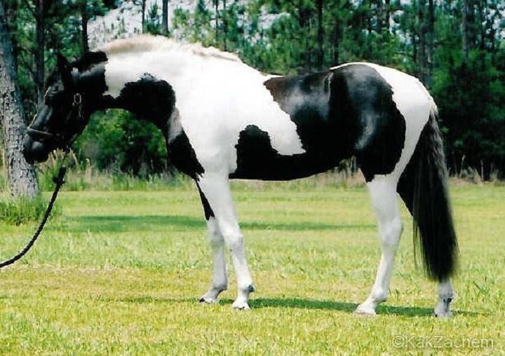25 самых красивых лошадей, от которых буквально захватывает дух! Смотрим фото!