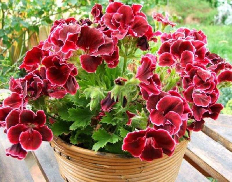 Список полезных и опасных растений, которые есть в доме практически у каждого!