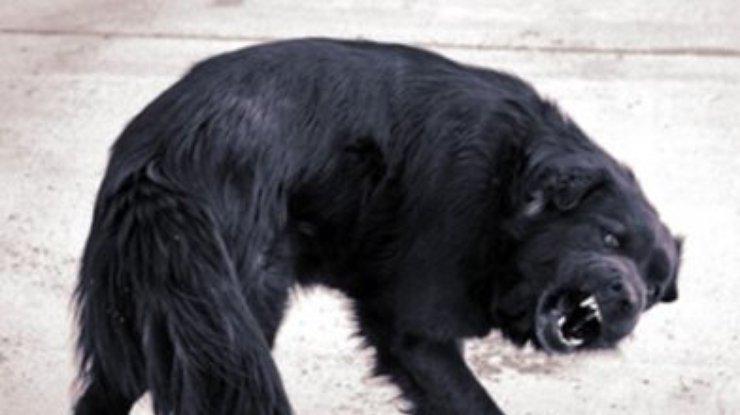 А вы знаете, какие животные наиболее опасны на планете? Список из 15 самых страшных для человека животных!
