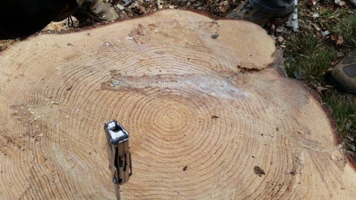 Стоило дровосекам начать пилить дерево, как они вдруг нашли нечто невообразимое… Привет из прошлого!