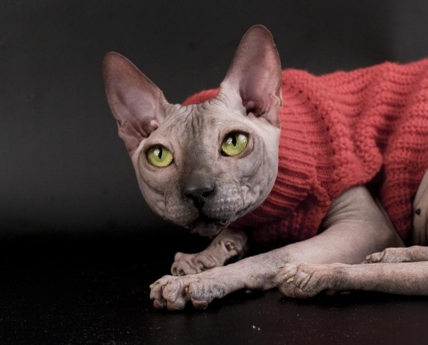Итак, как-то взял я домой кота… Лысого. Год ему был. И звали его Германом. Если бы кто мне сказал, что придется пережить…