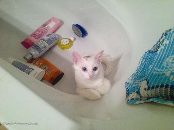 Наша девочка всегда обожала играть в ванной комнате… Наверное, из-за своей белой шубки думала, что…