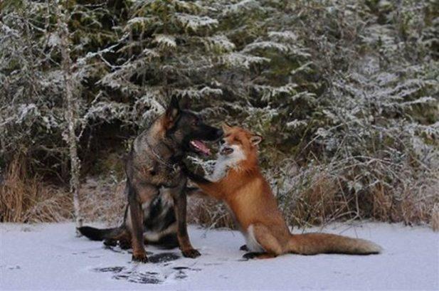 Пес начал ежедневно убегать в лес… И хозяину стало интересно, куда же тот бегает?