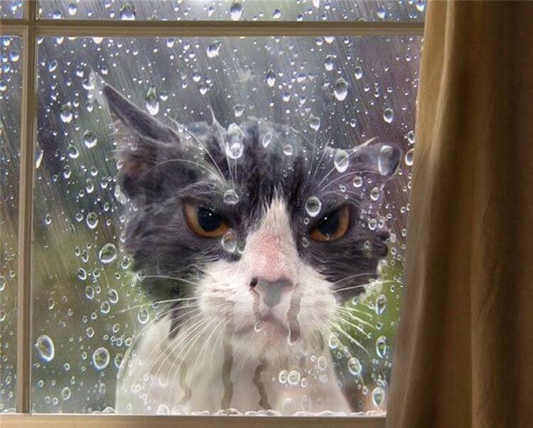 15+ котов, которые попали в передрягу… Искали приключений на свою голову? Получайте!