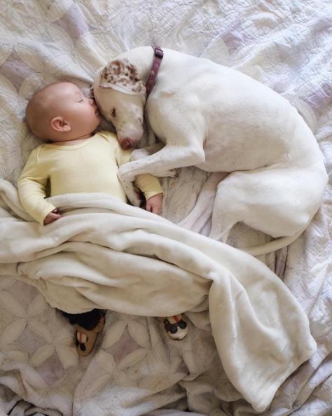 Эта собака была спасена из лап живодеров и боялась каждого… Кроме 11-месячного малыша, с которым они подружились!