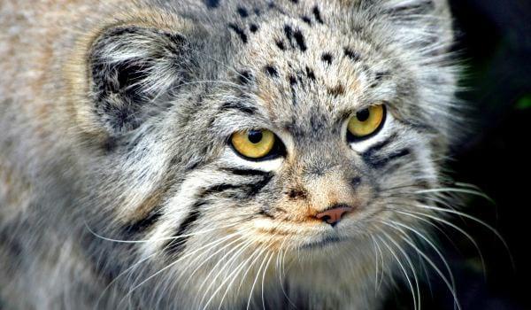 Старушка подумать не могла, какого «котенка» взяла домой с улицы! А он спас ее и вырос вот каким!