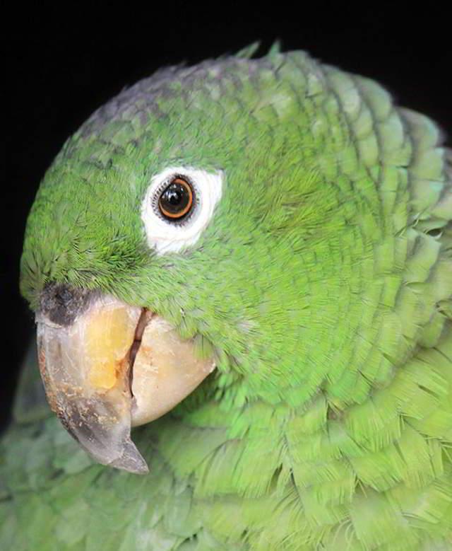 Попугай заскучал и подумал, что один дома. А потом… Вот, смотрите видео со скрытой камеры!