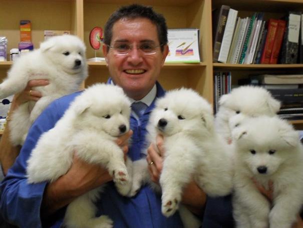 10+ причин работать ветеринаром – подборка умилительных фото с животными!