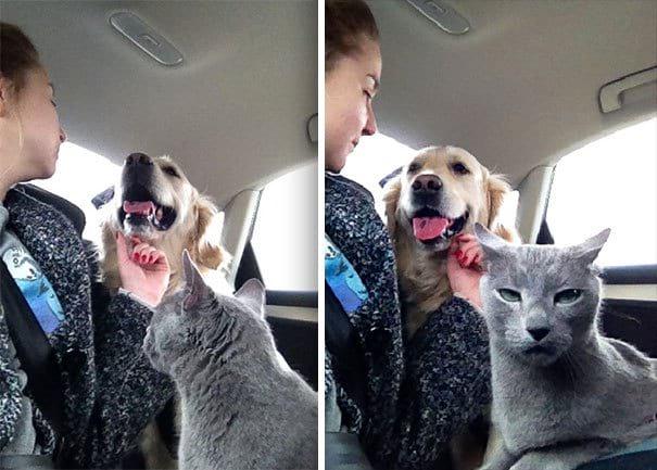 Уморительные фото кошек, которым точно дали бы «Оскар», если бы он существовал в кошачьем мире!