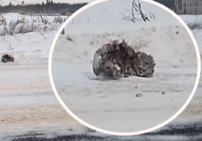 На улице сидела замерзшая кошечка и все проезжали мимо… Но мужчина не смог поступить так же и спас ее!