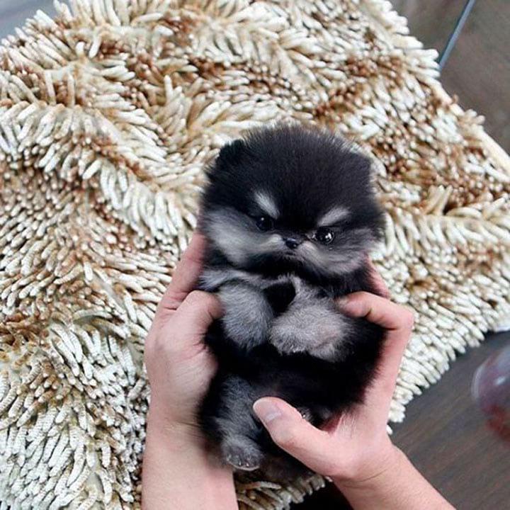 А вы любите смотреть фото маленьких милых щенят? Предлагаем 25 фото – сплошное ми-ми-ми!