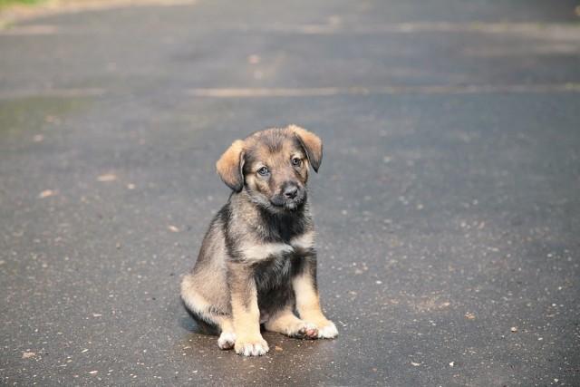 Очень трогательная и пронзительная история о том, как старый собака в человеке Человека спас!