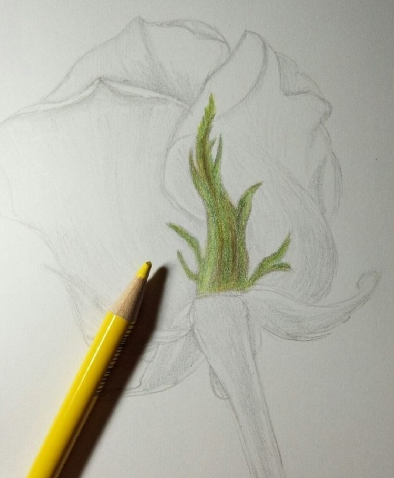 Пробуем самостоятельно нарисовать розу! С этим мастер-классом с задачей справятся даже дети!