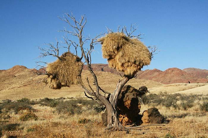 Видите стог сена на опоре? А это не стог, это чудо природы, которая способна удивлять и поражать!