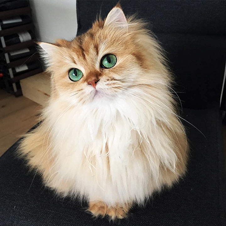 ТОП-20 самых милых и очаровательных кошечек на планете – звезды Интернета среди кошачьих!