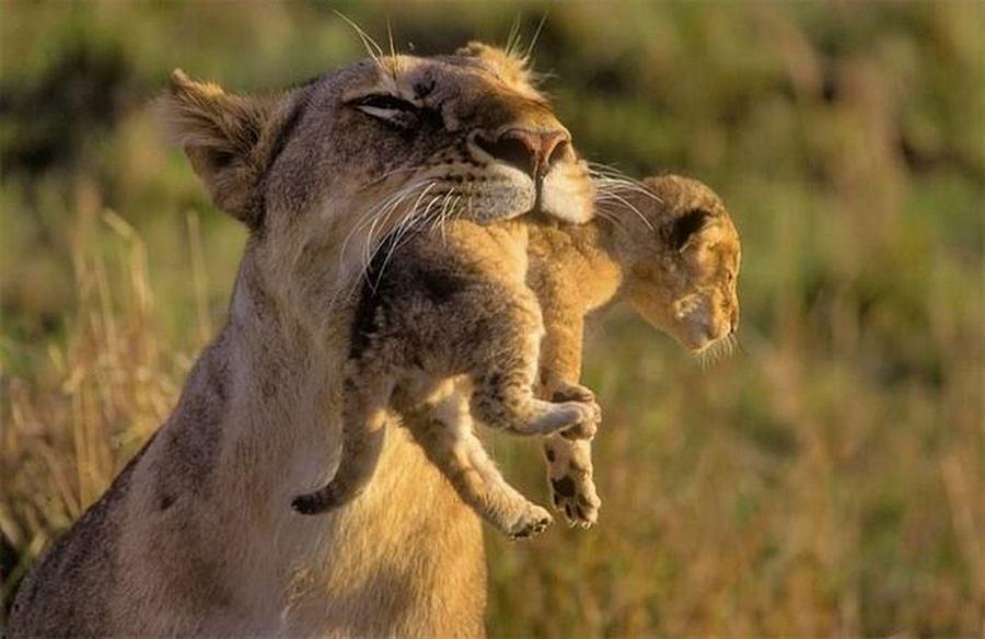 Мама – самое великое слово в мире! Только посмотрите на эти фото – так трогательно, за душу берет!