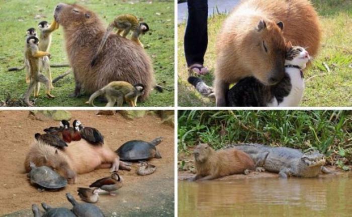 Фото с животными, которые стопроцентно сделают ваш день! Для классного настроения!