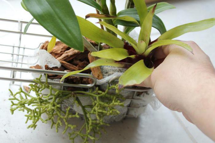 Лучший витаминный коктейль для орхидей – прекрасный метод реанимации цветов
