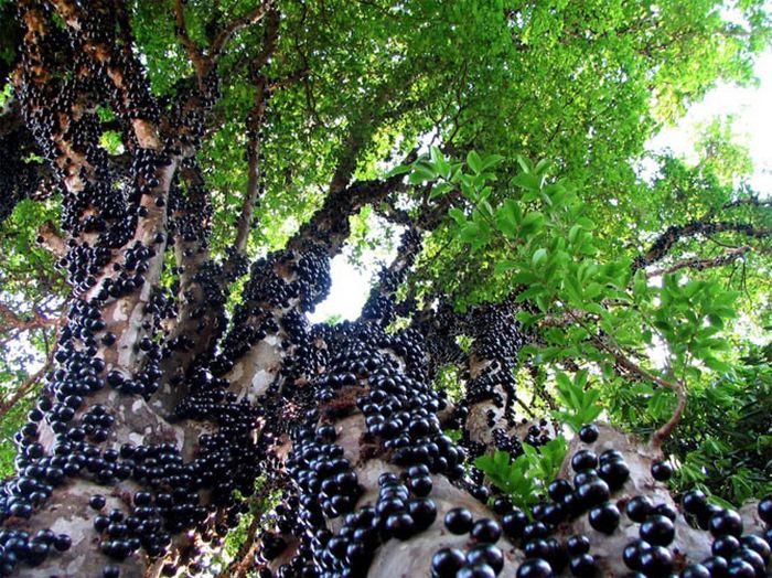 Невероятные фото самых прекрасных и странных деревьев планеты