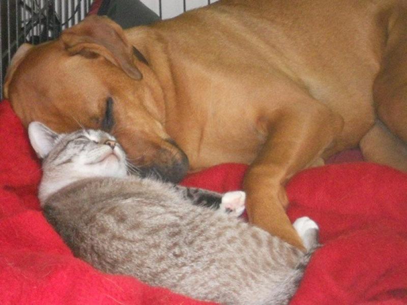 13 уморных фото котов и собак, оторваться от которых просто невозможно!