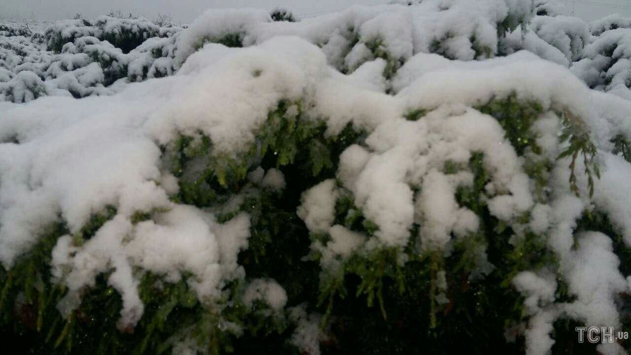 23 июня в Карпатах выпал снег. Да еще какой – такого здесь не видели давно…
