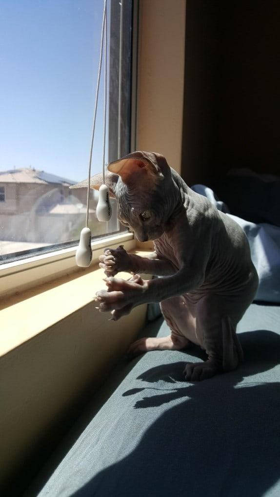Вам тоже противно, когда видите котов-сфинксов? Вот и зря – они очень-очень милые, только посмотрите эту подборку