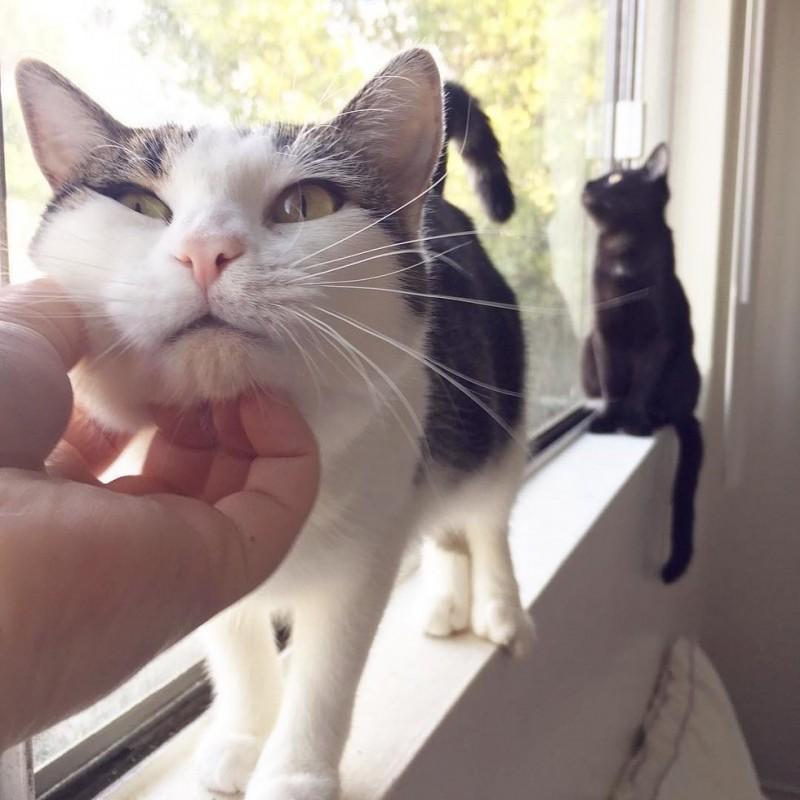 Кошка подобрала котят, вынянчила их, а потом решила стать спасительницей и притащила…