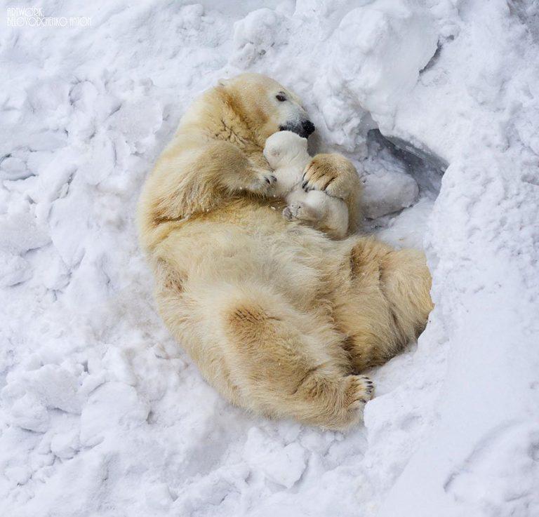 20+ фото животных с детенышами, которые трогают за самую душу – такие милахи…