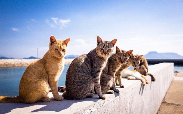 Летние коты – разморенные, ленивые и такие смешные (30+ фото)