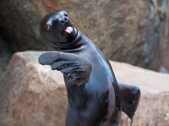 25 очень милых и трогательных животных, которые показывают язык всем окружающим